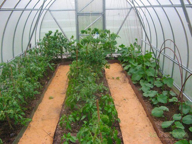 Выращивание огурцов с томатами