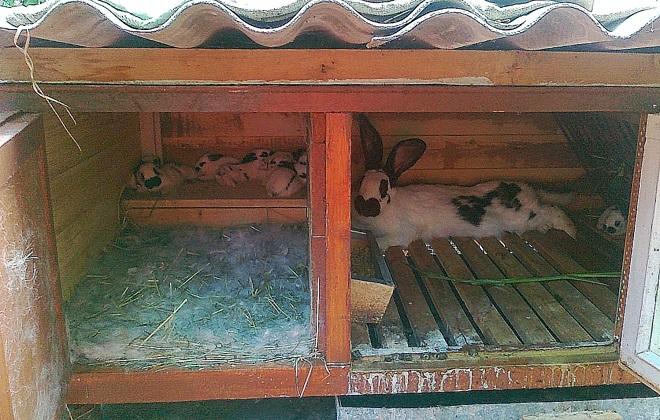Клетка для кролей своими руками
