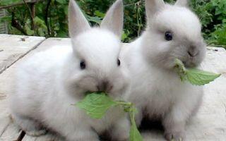 Сколько живут кролики разных пород