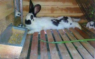 Кормушки для кроликов: чертежи, инструкции по изготовлению своими руками