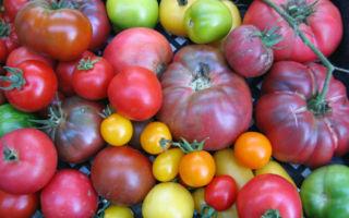 Обзор самых популярных сладких томатов