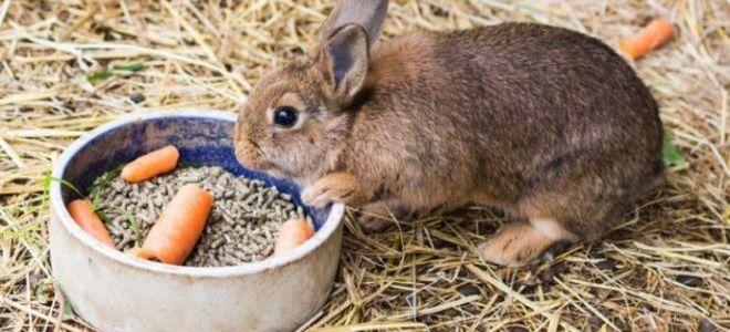 Почему кролик не ест и не пьет