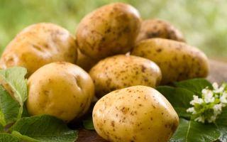 Можно ли кроликам давать картофель