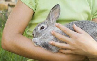 Как выполнить забой и разделку кролика самостоятельно