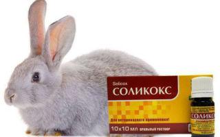 Применение препарата «Соликокс» на кроликах