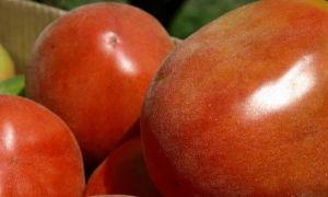 Описание и выращивание томата «Шахерезада»