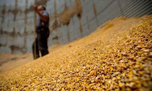 Увеличение переработки зерна в Тамбовской области