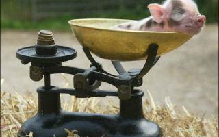 Методы измерения веса свиней