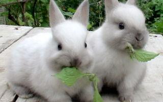 Кормление кроликов комбикормом: нормы, состав, свойства