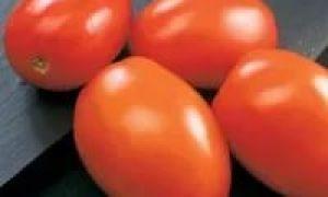 Описание и выращивание томатов «Гулливер»