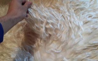 Причины выпадения шерсти у козы и их лечение