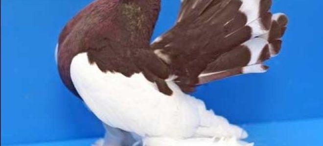 Картинки и фото голубей
