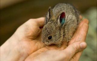 Как дрессировать и приучать кролика к рукам