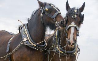 Упряжь, хомут и сбруя для лошади