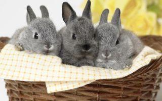 Как определить пол кролика? Проверенные методы