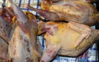 Чем полезны мясо и яйца фазанов