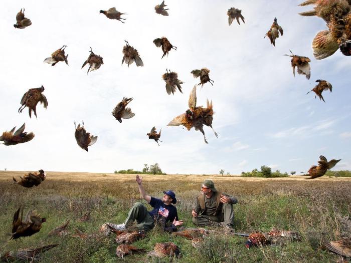 Как поймать фазана охотнику