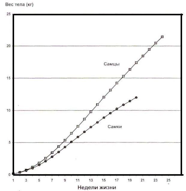Увеличение веса по неделям - график
