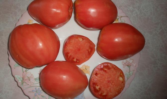 Плоды томатов сорта Батяня