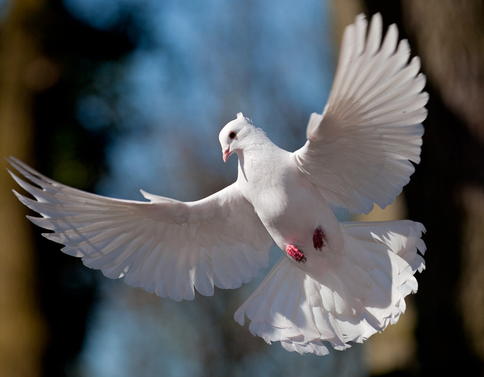 Месяцев ребенку, картинки голубями