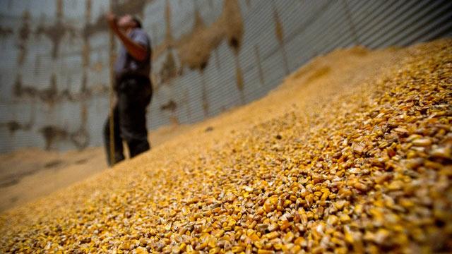 Зерно на переработке
