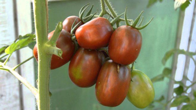 Куст с помидорами де барао