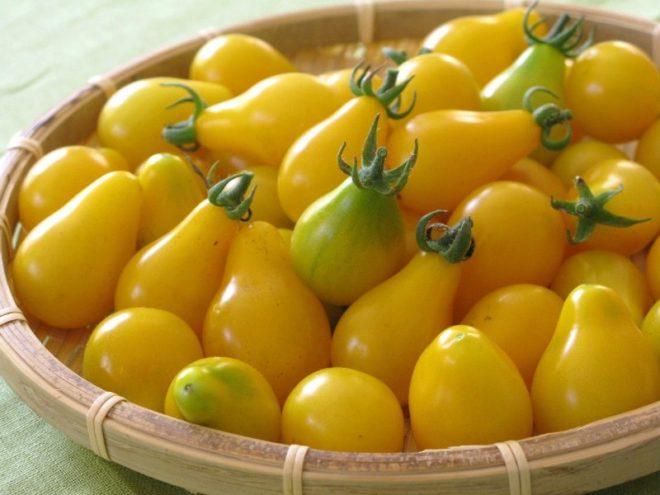 """Выращивать томаты """"Медовая капля"""" сложно"""