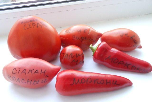 Минусинских томатов существует множество