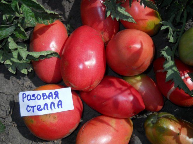 """Вкус томатов """"Розовая Стелла"""" нравится всем"""