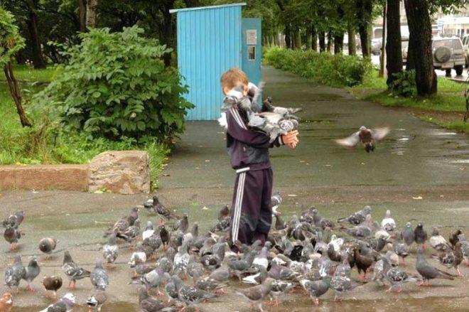 Срок жизни голубя зависит от условий проживания