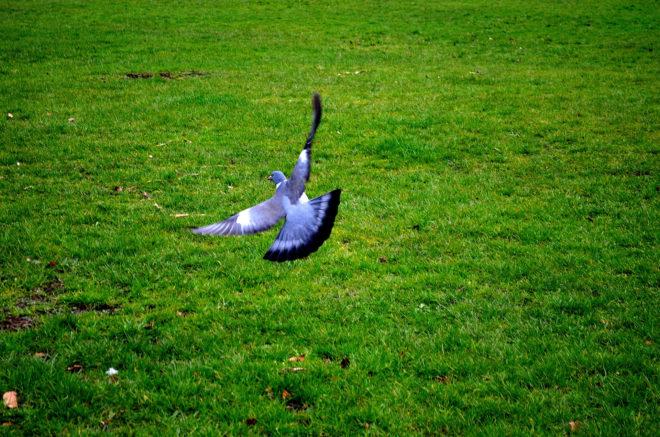 Уставшие и больные птицы не летают