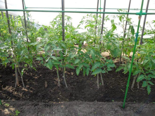 """Техника """"сдвоенных корней"""" улучшает урожайность"""