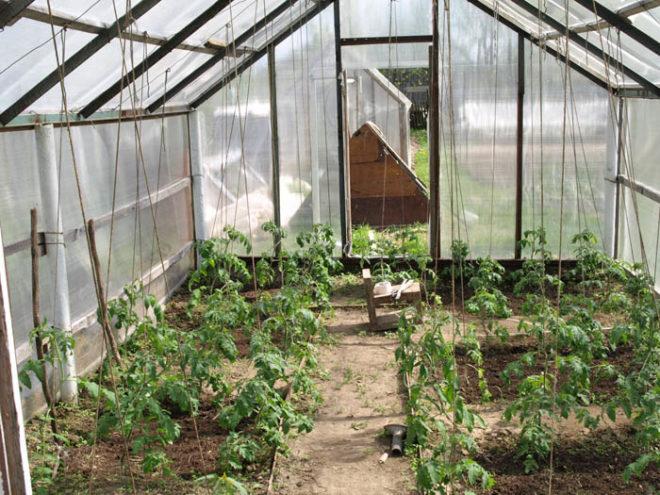 Удобрение грунта в теплице повысит урожайность