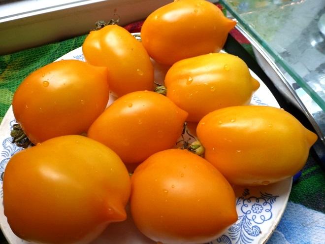 Этот сорт томатов плодоносит все лето