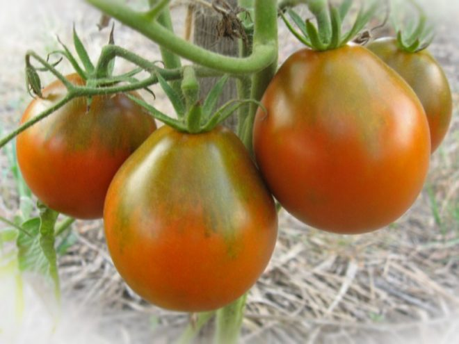Грушевидные томаты вкусны и красивы