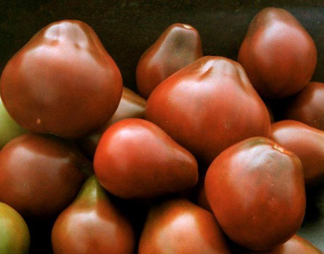 """Цвет томатов """"Черная груша"""" необычен"""