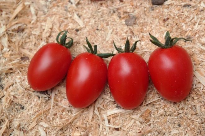 """Выращивать томаты """"Карамель"""" несложно"""