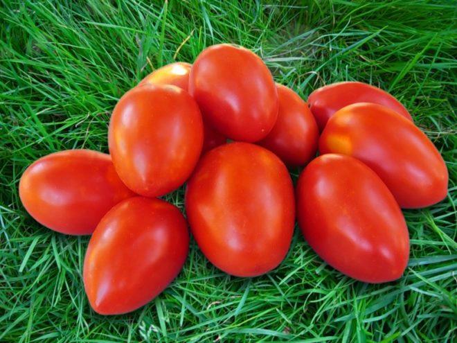 """Плоды томатов """"Карамель"""" необычны по форме, цвету и вкусу"""