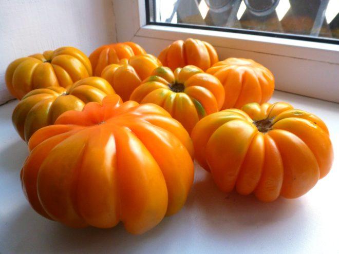 """Плоды томатов """"Лотарингская красавица"""" разнообразны по внешнему виду"""