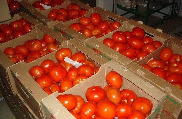 """Хранить томаты """"Малиновое чудо"""" нужно в прохладном подвале"""