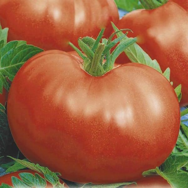 Непасынкующиеся томаты более популярны
