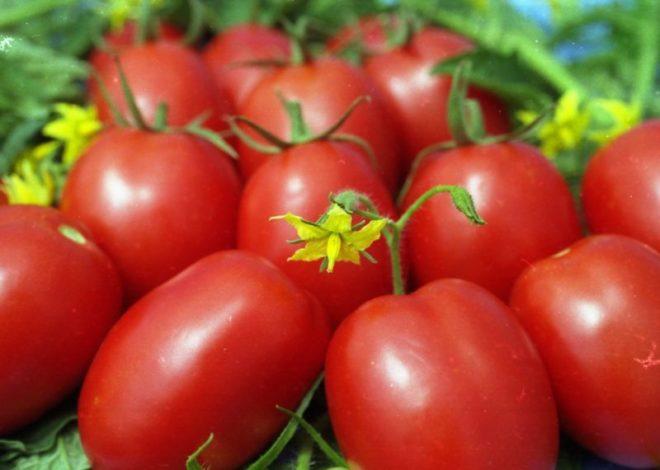 """Томаты """"Паленка"""" имеют вытянутую форму и яркий красный оттенок"""