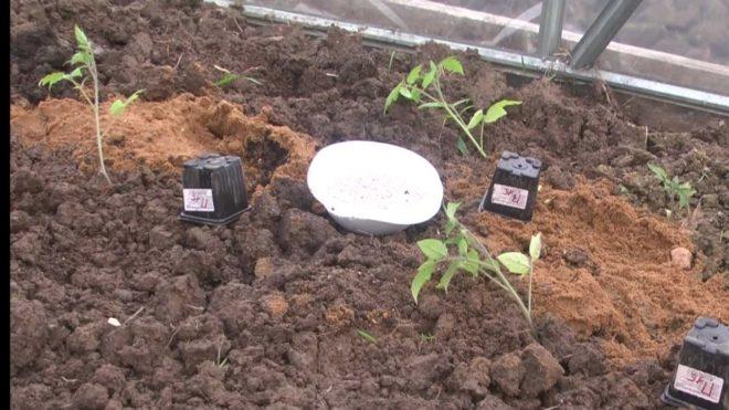 Подготовка грунта для помидоров необходима