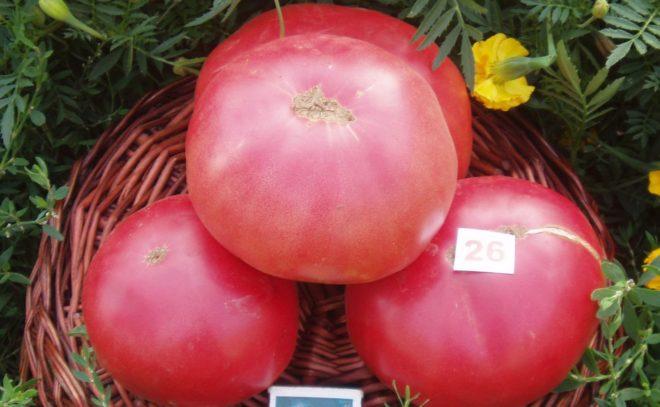 """Вес томатов """"Розовый гигант"""" очень большой"""