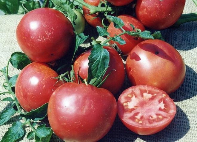 Вкусовые и агротехнические свойства Розовый титан не оставляют желать лучшего