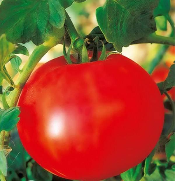 У этого сорта помидоров есть несколько разновидностей