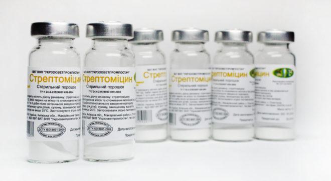 Стрептомицин защищает от болезней