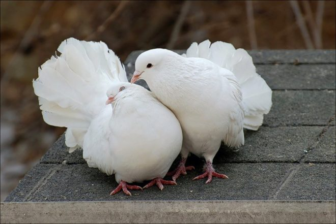 Определять пол птицы необходимо