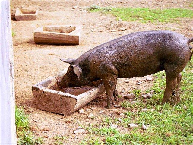 Корыто для свиней своими руками