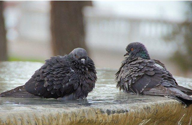 Об орнитозе свидетельствует насморк, диарея и отсутствие аппетита у птиц